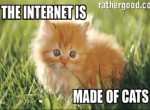 The Internet Is Made Of Cats