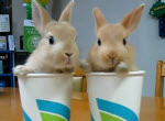 2 Rabbits, 2 Cups